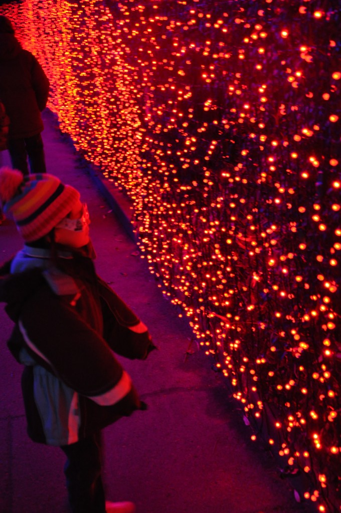 zoo lights wall of red lights