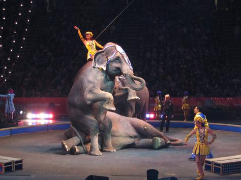 Ringling Brothers and Barnum & Bailey Night #2 Part 1 ...