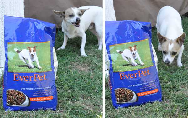 Dollar general Everpet dog food treats (5)