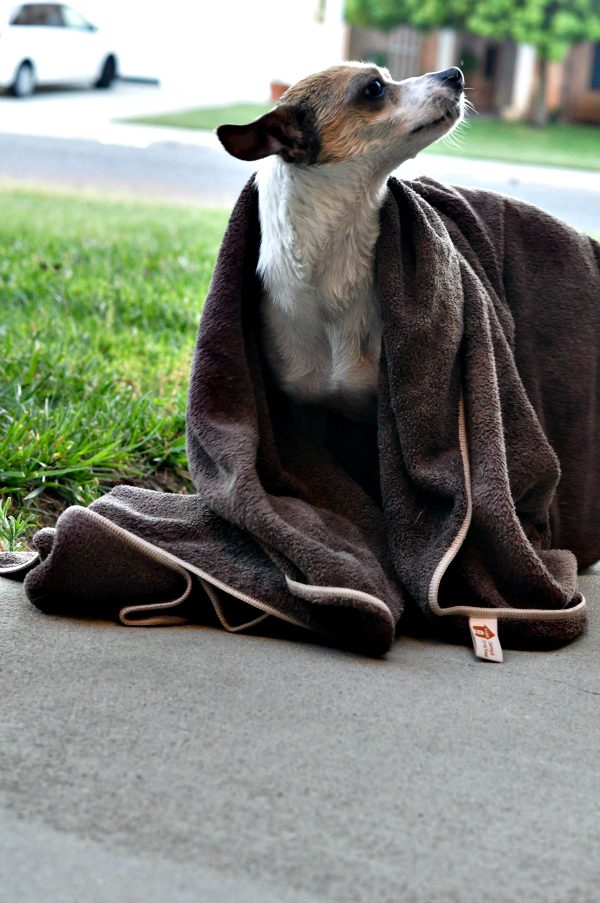 marley e cloth towel for pets