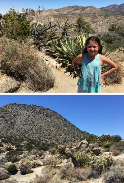 palm springs desert family hiking california